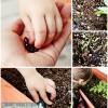 Toddler Snacking Garden