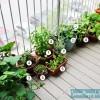 Our Snacking Garden