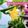 How to Pollinate Fruit and Vegetable Plants