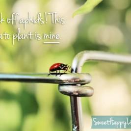 Our ladybug army