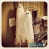 Cute DIY Halloween Ghosts