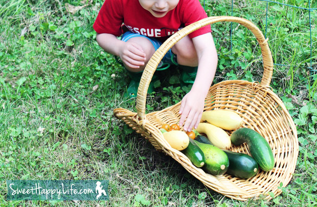 Harvesting Zucchini