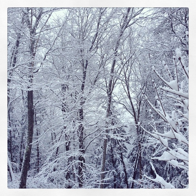 Woke to a winter wonderland today.